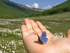 Притча о бабочке и мудреце
